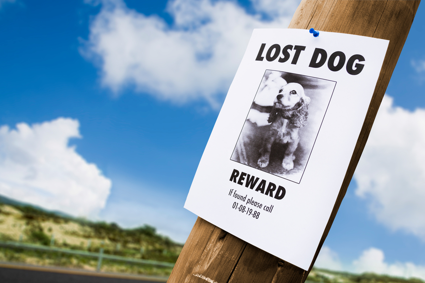Preventing Pets from Becoming Lost
