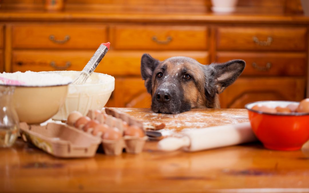 Safe Foods For Dogs With Pancreatitis