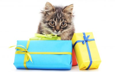 DIY Holiday Gifts for Pets
