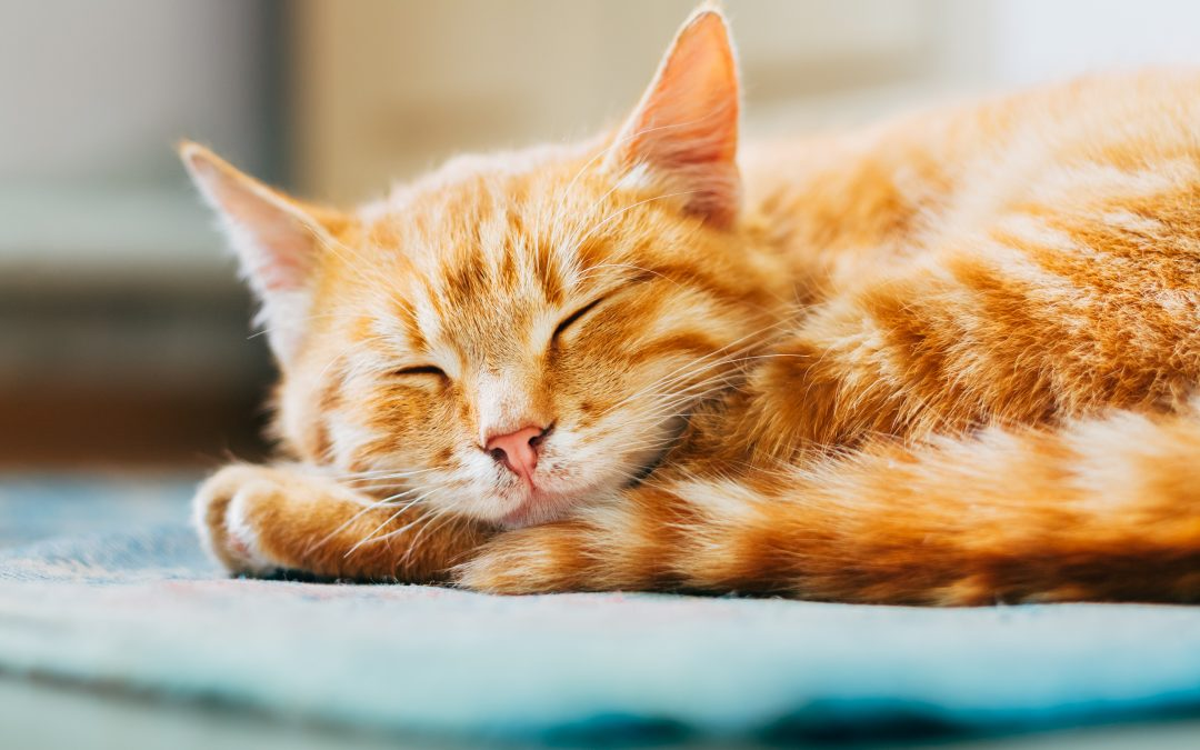 Five Tips to Keep Your Cat Healthy