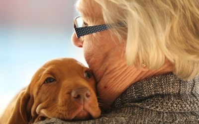Finding a Lost Pet for the Elderly