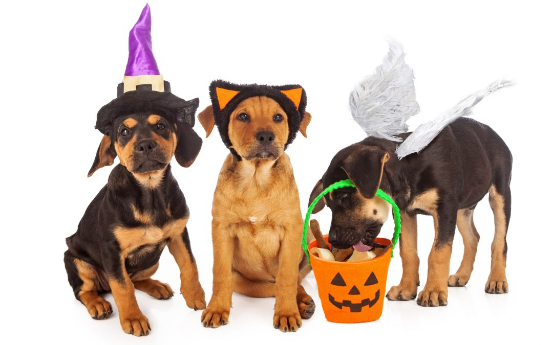 Humane Society of Macomb's Halloween Bash