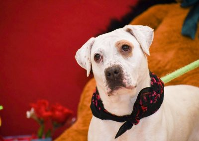 a dog with a valentines day bandana