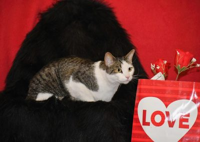 a cat next to a valentines day bag