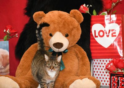 A cat cuddling with a giant teddy bear