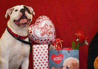 a dog posing next to valentines day bags