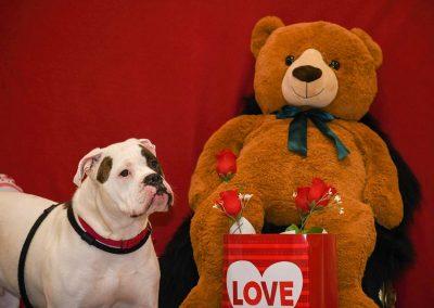 a dog posing next to a giant teddy bear