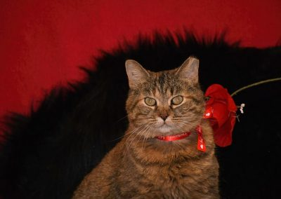 A cat with a valentines day collar on