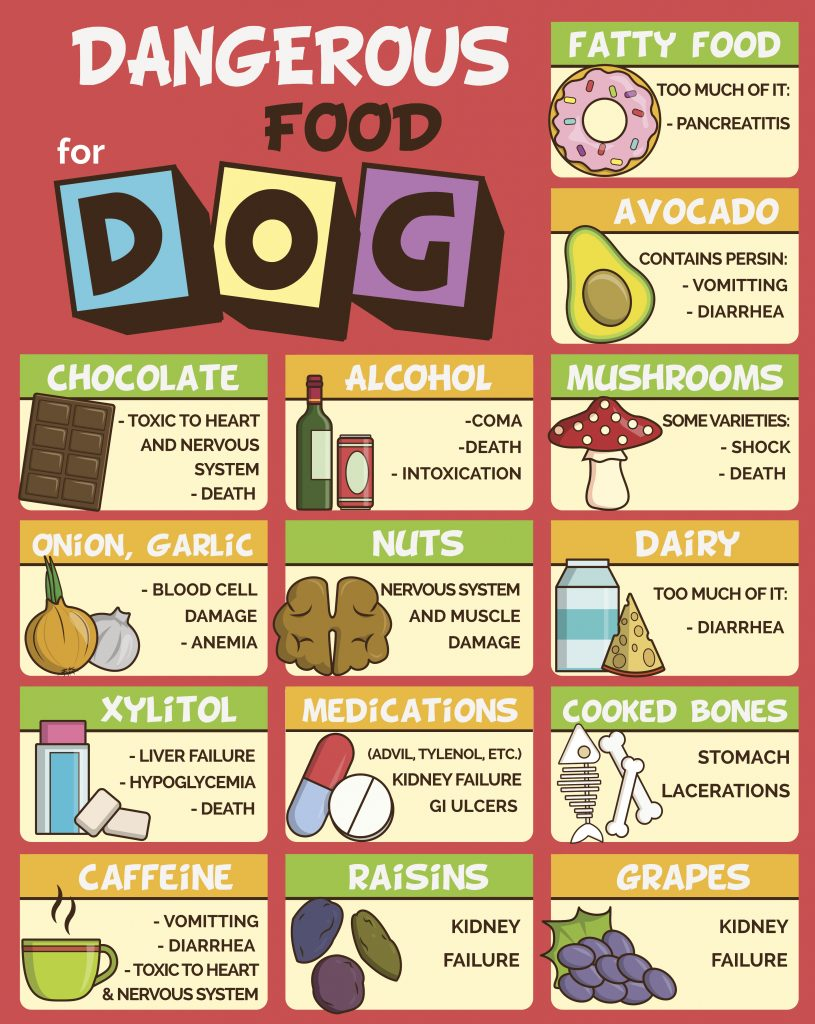 Dangerous food for dogs