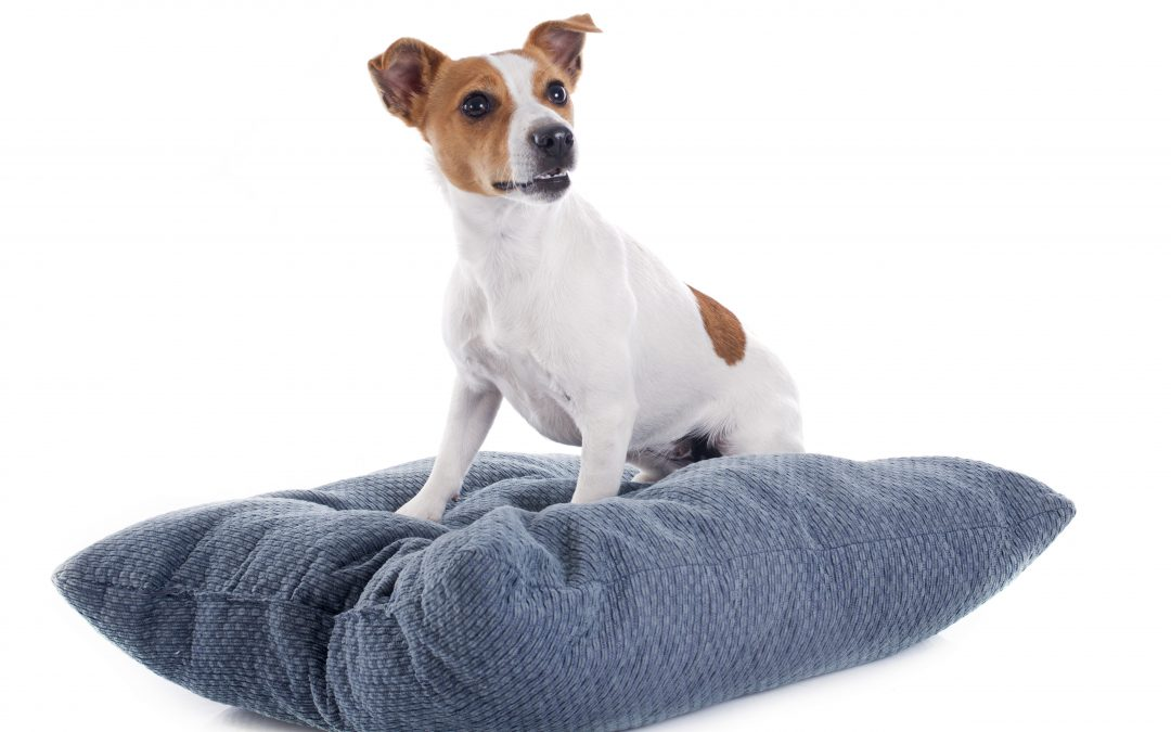Spring Cleaning for your Pet