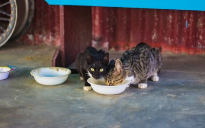New Pet Food Bank to Help the Community