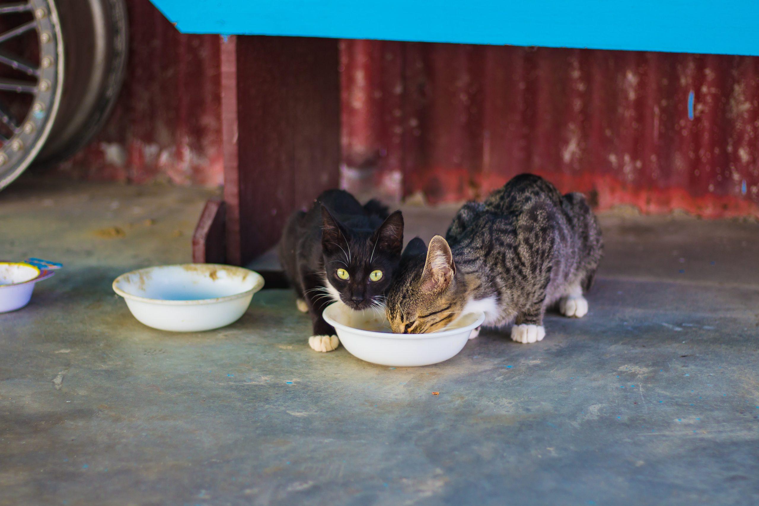 kittens eating food