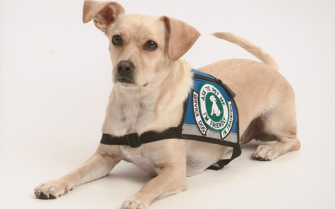 Therapy Pets and Service Animals: What is the Difference?