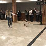 Dog Tricks 4