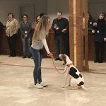 Dog Tricks 3