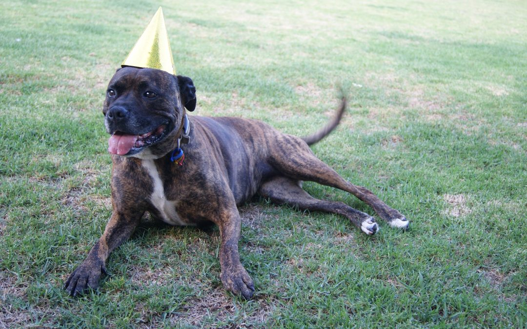 Celebrating Your Pet's Birthday or Gotcha Day