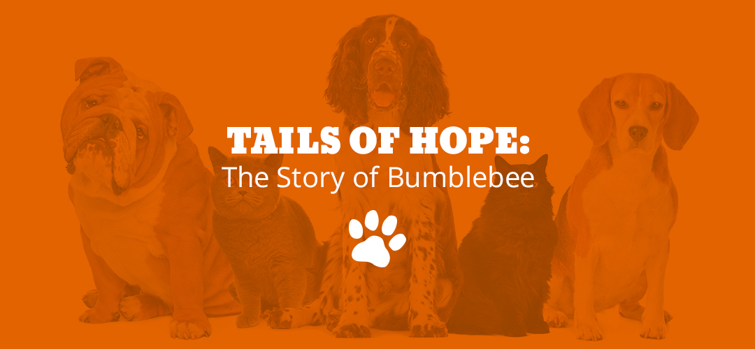 Tails of Hope: The Story of Bumblebee