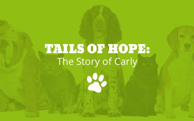 Tails of Hope: The Story of Carly
