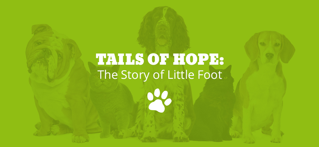 Tails of Hope: The Story of Little Foot
