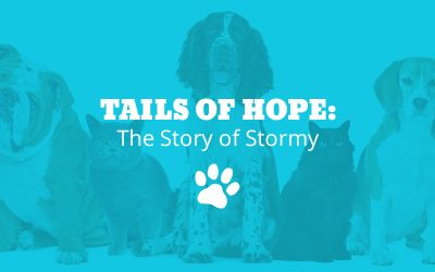 Tails of Hope: The Story of Stormy