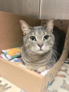 Tails of Hope: The Story of Gidget | Humane Society of Macomb