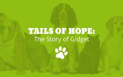 Tails of Hope: The Story of Gidget