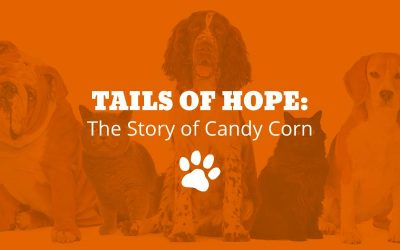 Tails of Hope: The Story of Candy Corn