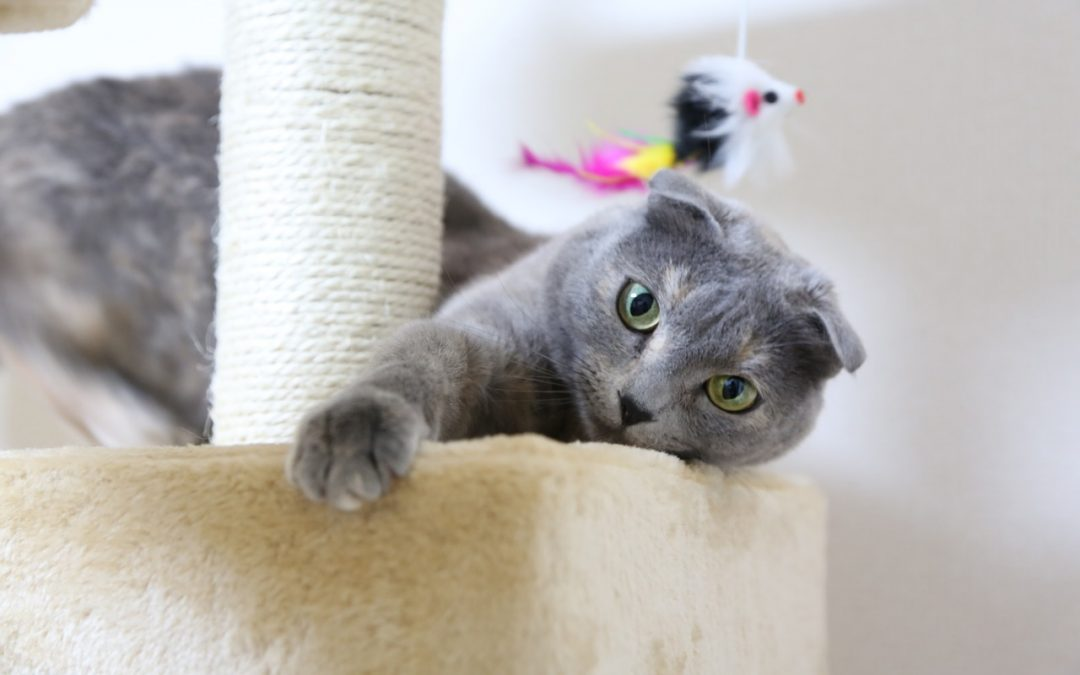 Why Cats Need Perches and Places to Scratch at Home