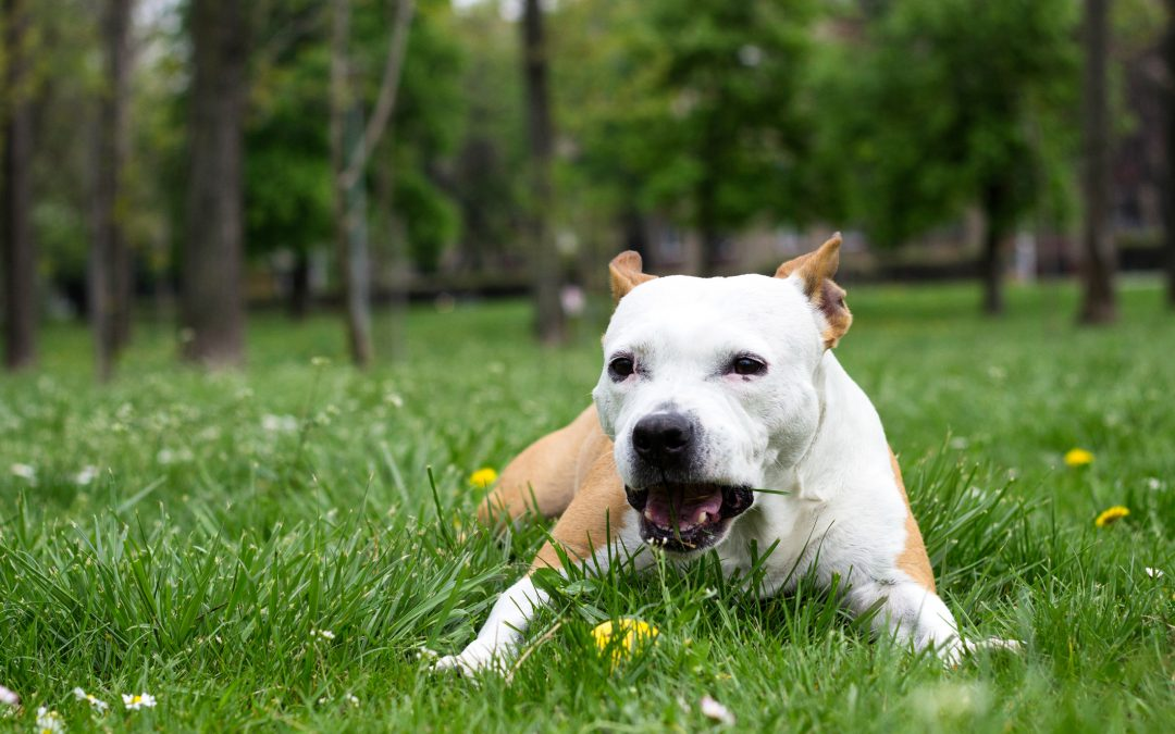 Why Are Dogs Obsessed with Eating Grass? Reason 3 May Surprise You