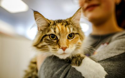 What We Wish Everyone Knew About Our Pet Adoptions
