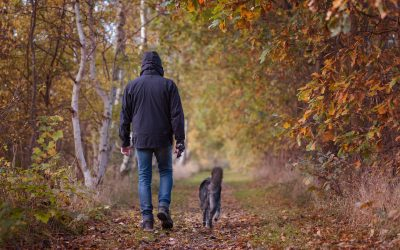 Fall in Love with These Autumn Friendly Outdoor Dog Activities