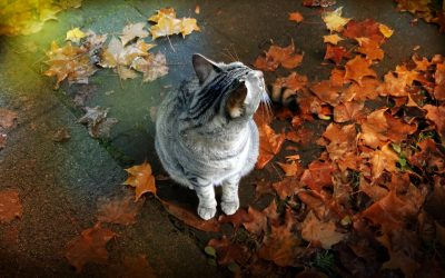 Never Ignore Autumn Pet Care and Here Are the Reasons Why