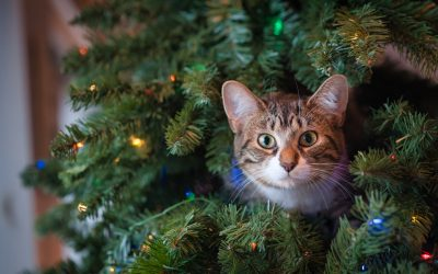 Keep Your Cats Safe and Healthy this Holiday Season