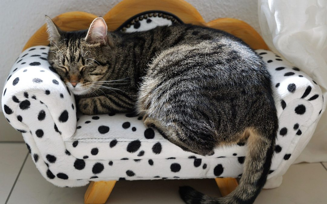 Is My Cat Stressed? 3 Quick Signs to Look for
