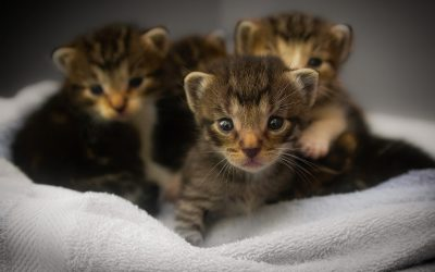 I Found a Litter of Kittens, What Should I Do?
