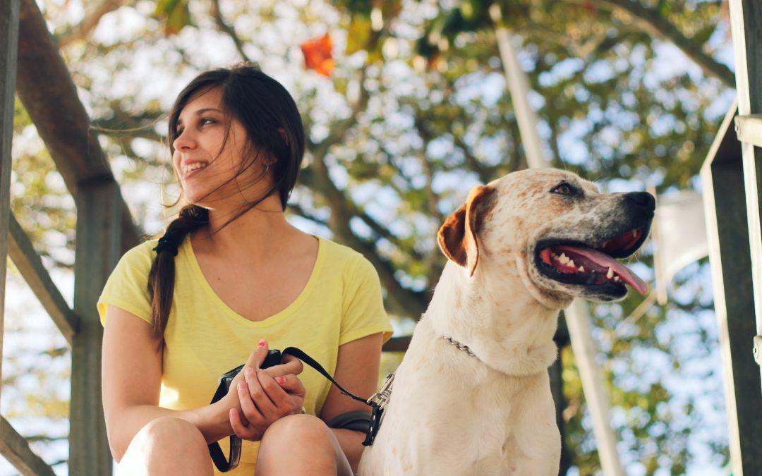5 Tips for the Best and Safest Dog Gone Summer