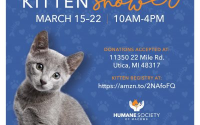 We're Expecting! Help us prepare by supporting our kitten shower!