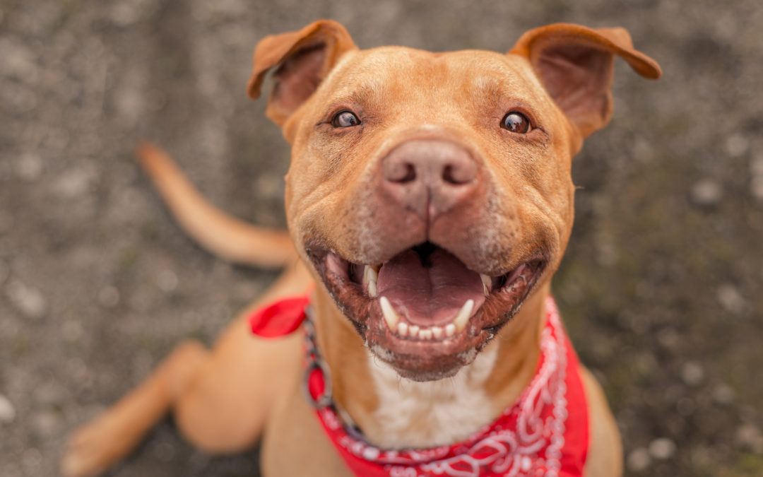 5 Ways to Celebrate National Pet Month