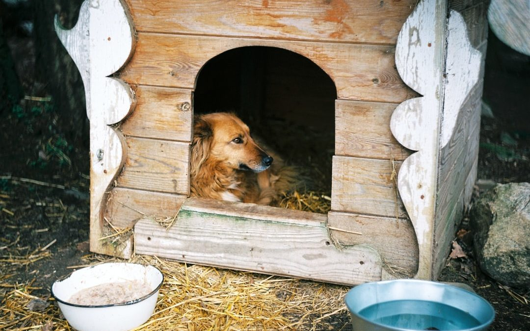 The Ultimate Guide to Dog House Repair