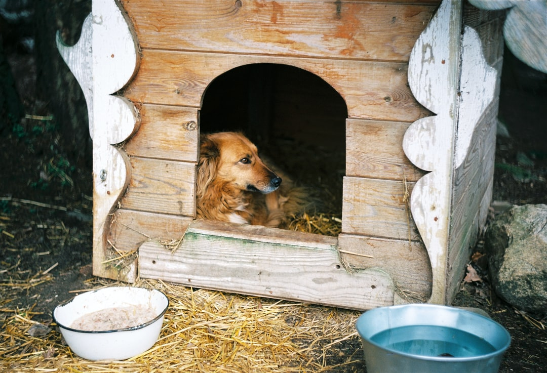 brown dog inside dog house outside