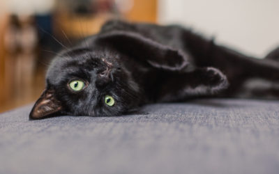 3 Great Things About Black Cats That You Probably Didn't Know