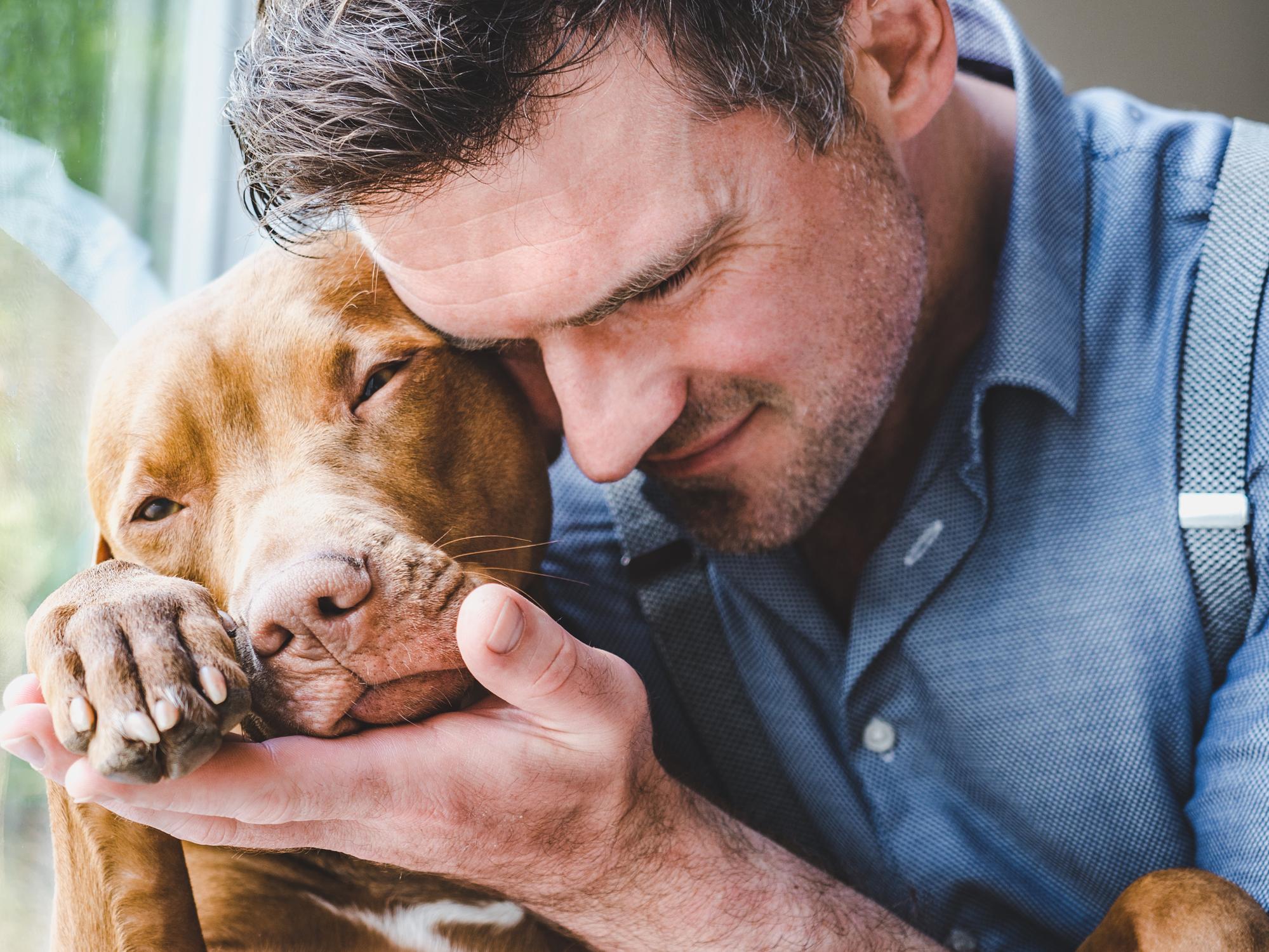 brown pitbull hugging owner to symbolize adopt a shelter dog month